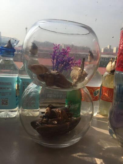 创意桌面鱼缸透明玻璃圆形鱼缸小型迷你小金鱼缸 腰径20cm+定植篮 晒单图
