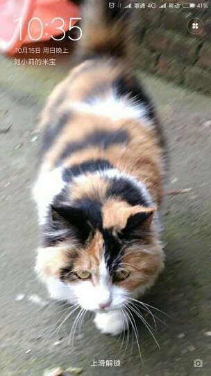 美滋元 宠物猫粮 成猫猫粮 去毛球除便臭2.5kg 晒单图