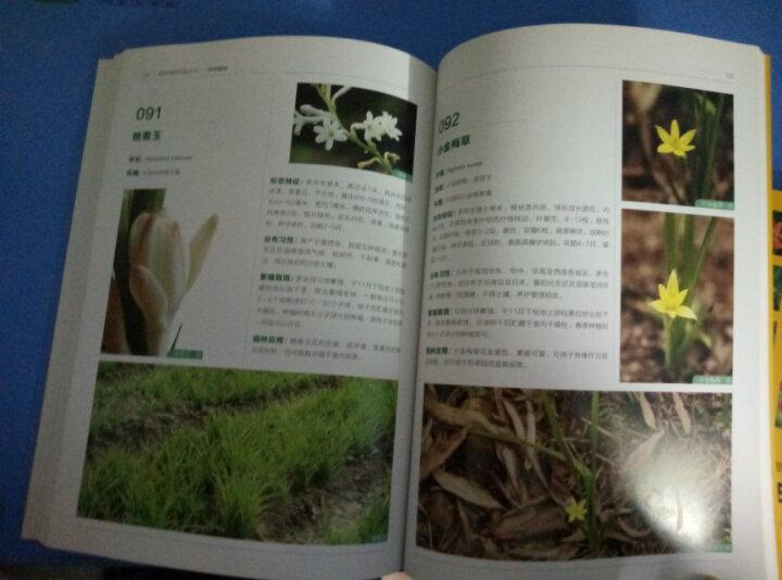 园林植物图鉴丛书:球根植物 晒单图