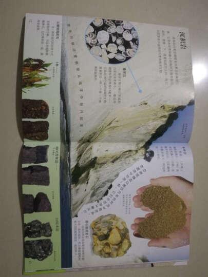 DK视觉大发现:岩石与矿物 晒单图
