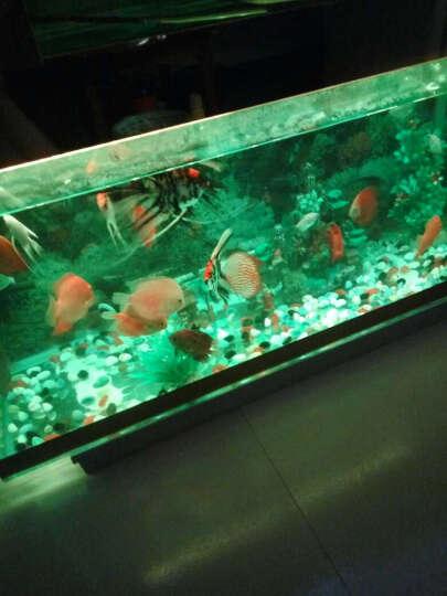 意牌鱼缸灯led灯水族箱灯潜水灯水族渔缸照明灯设备LED灯管草缸水草灯45红色遥控变色 蓝白色 长18cm(适合20-30cm小缸) 晒单图