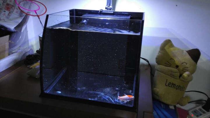 喜高 创意小鱼缸桌面鱼缸生态鱼缸高清玻璃迷你水族箱热带鱼金鱼缸懒人鱼缸 大肚子30CM黑色保温 晒单图