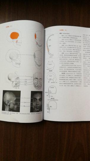 牛津艺用人体解剖学(经典版) 晒单图