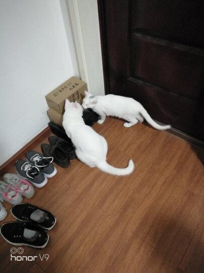 豪爵宠物猫粮挑嘴通用型猫粮2.2kg全猫种天然猫粮幼猫成猫全期猫粮 晒单图