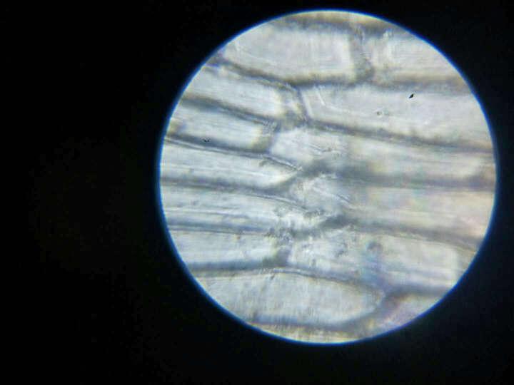 伯爵 生物显微镜 学生儿童光学高倍 医疗养殖显微镜 显微镜800倍+反光镜 晒单图