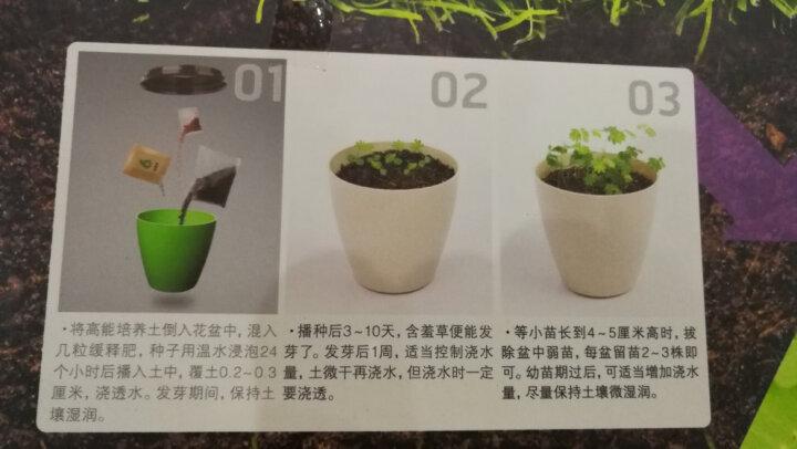 家庭园艺亲子种植9种植物可选儿童创意DIY杯子栽培蔬果迷你植物小盆栽办公桌饰品含种植工具 2杯装(红姑娘+水果黄瓜) 晒单图