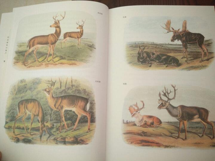 等鹿来 晒单图