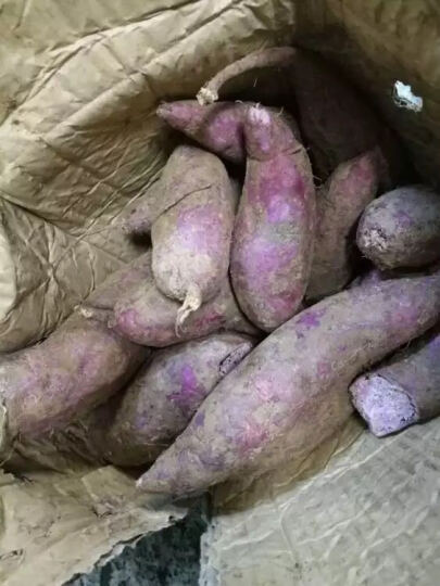 味道网 湖北宜城将军紫薯 约9-16个 2.5kg 地瓜番薯山芋蔬菜 晒单图