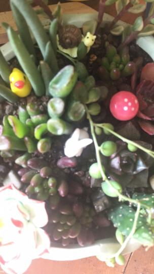 小蘑菇多肉微景观盆栽盆景摆件配件饰品 蜗牛/1个颜色随机/2.2厘米*1.6厘米 晒单图