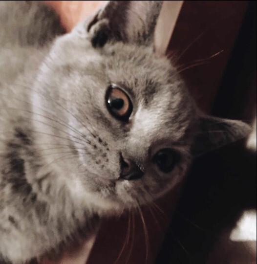 奥丁猫粮10kg 成幼猫海洋鱼味英短折耳天然粮 海洋鱼猫粮 10kg 晒单图