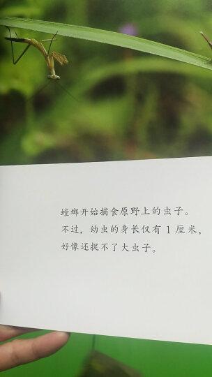 这么慢,那么美+万物皆有欢喜处+生命的绽放(套装共3册) 晒单图