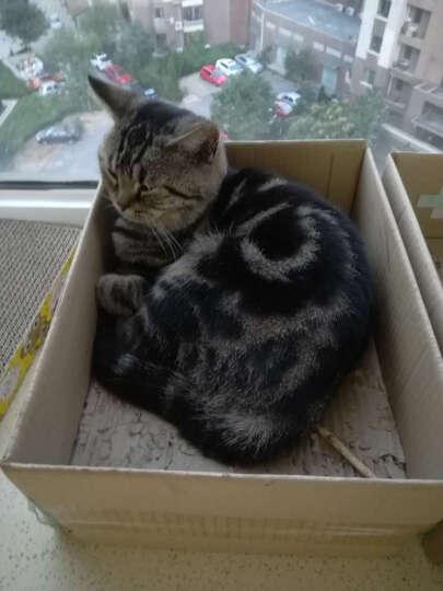 伟嘉妙鲜包 精选鲜肝成猫湿粮鲜封包85g 猫零食 晒单图