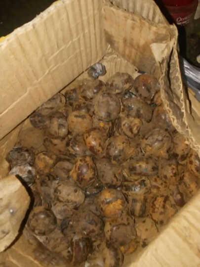 大菜园 马蹄 荸荠 2.5kg 非广西荔浦马蹄 杨梅 红地栗 地梨 农家 生鲜新鲜蔬菜   天S 晒单图