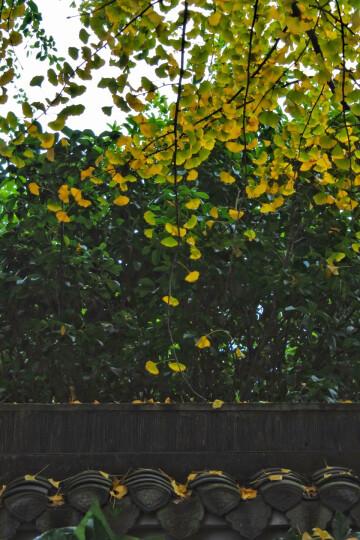 尼康(Nikon)J5 微单相机 尼克尔 VR防抖 J5+1 10-30mm f/3.5-5.6 PD镜头 银色(可更换镜头 4K视频录制) 晒单图