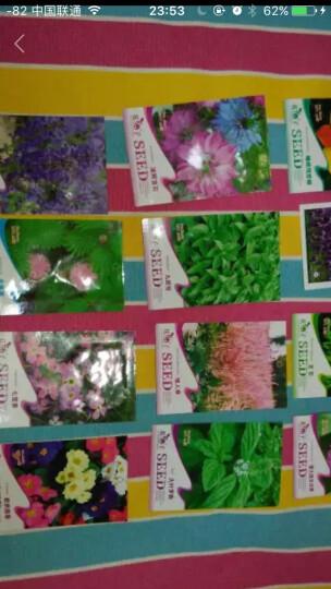 花仙子 白萝卜 白色 蔬菜种子 家庭阳台/园艺休闲 100粒/袋 晒单图