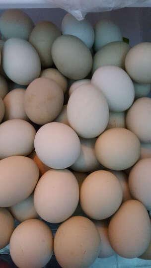 密园小农 绿壳乌鸡蛋 40枚 约2kg 晒单图
