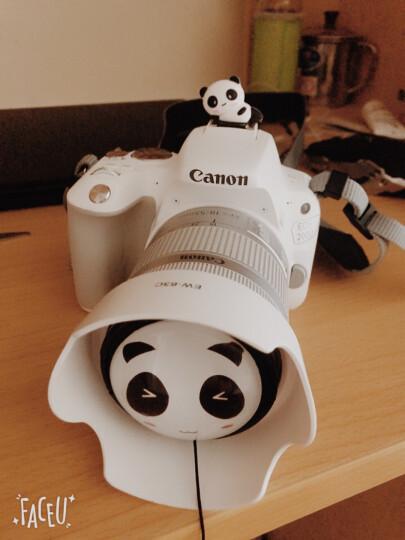 佳能(Canon)EOS 200D/200d2代/200d二代/200dii 单反相机入门 迷你单反 200d (EF-S18-55白色女神版 晒单图