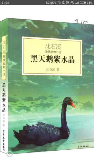 沈石溪激情动物小说:黑天鹅紫水晶 晒单图