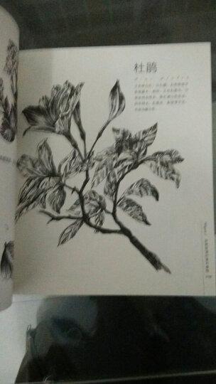 黑白花意:笔尖下的87朵花之绘 晒单图