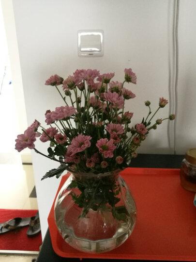 豪斯特丽(HOSTLY) 欧式经典水培巴洛克花瓶 透明玻璃花器客厅卧室餐桌茶几装饰摆件 花瓶+黄色玫瑰2束 晒单图