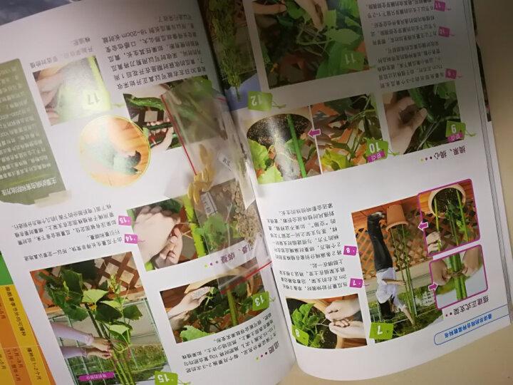 最详尽的阳台种菜教科书 晒单图