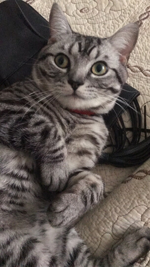 豪爵宠物猫粮幼猫及怀孕哺乳期母猫粮2.2kg海鲜鲜鸡肝高钙奶天然幼猫猫粮 晒单图