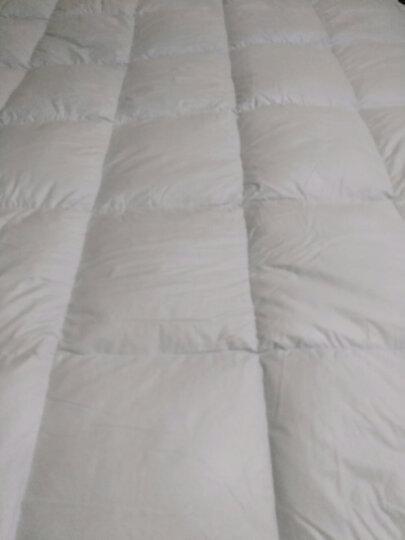 柳桥家纺 羽绒床垫 加厚 50白鹅绒单双人五星酒店榻榻米护垫软褥子 白色 180cm*200cm 晒单图
