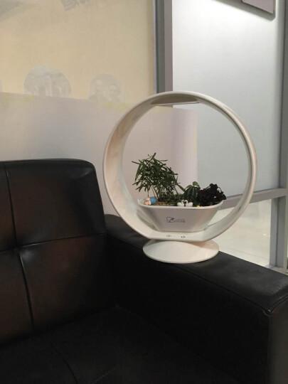 Gardentime创意礼品礼物DIY植物灯520情人节礼物LED小夜灯发光蓝牙音响微景观ZT03 花好月圆(有蓝牙) 晒单图