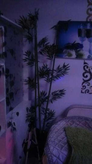 春之梦高仿真竹子 假竹子装饰 造景绿植仿真竹子隔断屏风装饰加密毛竹 2米升级款(过胶叶) 晒单图