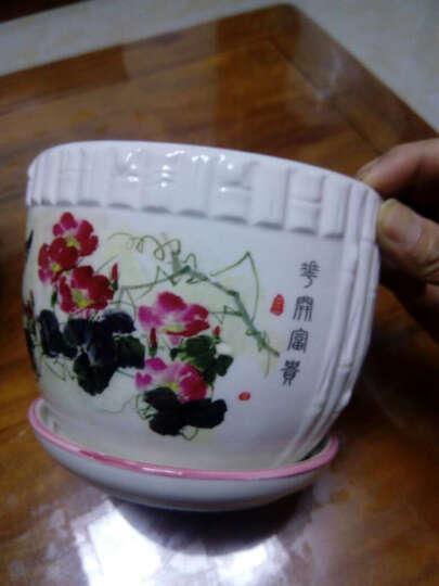 凯旋花卉 陶瓷花盆 国画风景画 白瓷花盆花瓶 含托盘 桌面盆栽花盆 大白菜 大号口径17厘米 晒单图