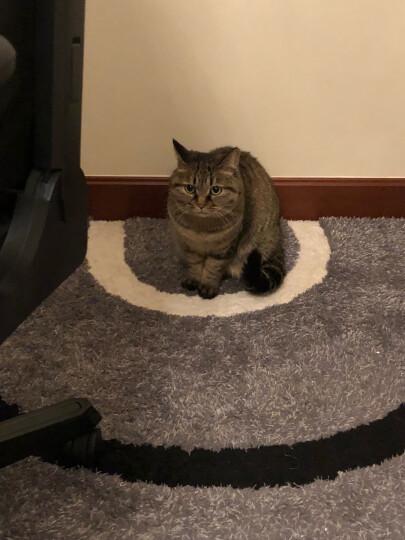 顽皮(Wanpy)宠物猫粮猫湿粮猫咪罐头鸡肉&虾仁猫零食鲜封包80g*15袋整盒装 晒单图