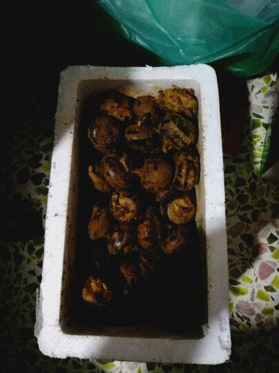 新鲜现挖荸荠 马蹄 2.5kg 新鲜荸荠乌芋地栗鲜货新鲜蔬菜 晒单图