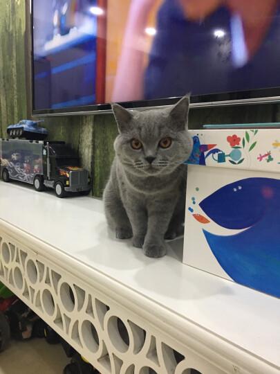 澳路雪猫用香波猫浴液防脱毛去毛球猫用沐浴露猫咪洗澡用品400ml 猫咪去毛球沐浴液400ml 晒单图