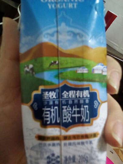 圣牧 全程沙漠有机巴氏杀菌常温原味有机酸奶酸牛奶205g*12包 晒单图