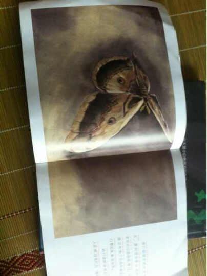 昆虫记:创意造型师(彩绘注音版) 晒单图