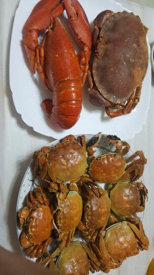海购时代 英国熟冻面包蟹黄金蟹 400-600g袋装 晒单图