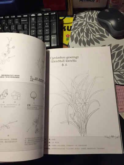 铅笔线描技法:花草篇 晒单图