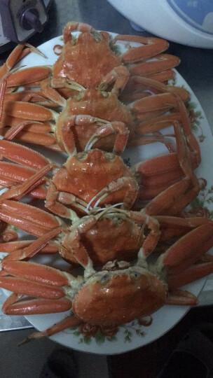 鲜玛特  鲜活板蟹500g(3-4只) 籽蟹生猛海鲜长脚蟹 晒单图