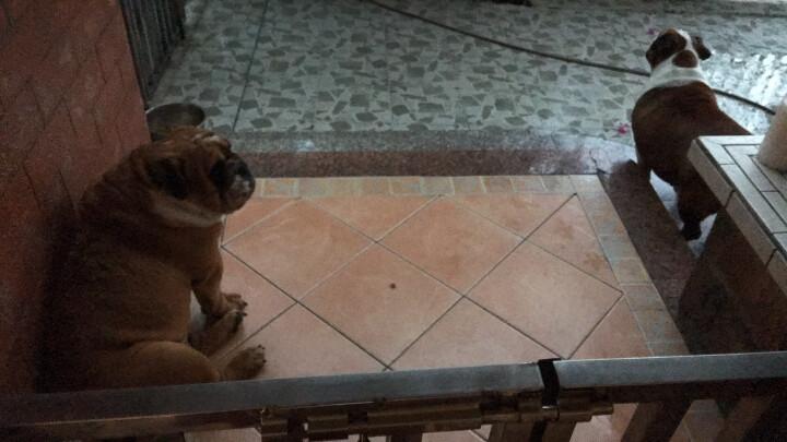 宠物消毒喷剂 犬猫祛味消毒水 300ml JD配送 晒单图