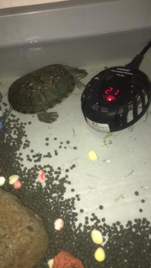 海霸(HOPAR) 鱼缸加热棒乌龟水族箱龟缸不锈钢自动恒温LED数字显示圆形迷你加热棒50W 海霸圆形加热棒100W(自带数字温度计) 晒单图