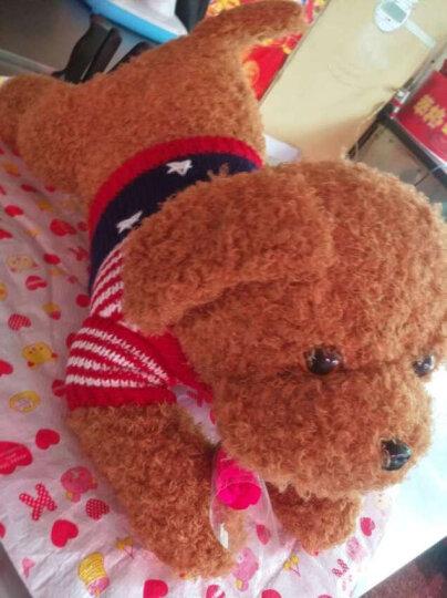 魔法龙 毛衣泰迪狗公仔抱枕毛绒玩具大号趴趴狗布娃娃玩偶毛衣小狗哈士奇狗熊节日礼物女生 棕色-泰迪狗 60厘米 晒单图