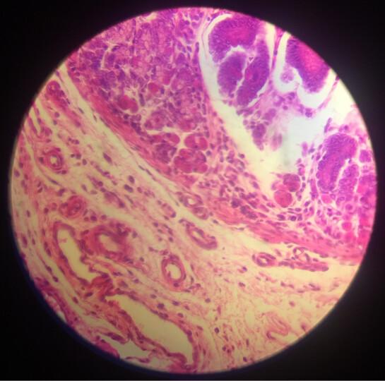 美佳朗(MCALON) 生物显微镜MCL-1600专业儿童学生高倍高清畜牧养殖 出厂标配+20礼品+TV520摄像头 晒单图