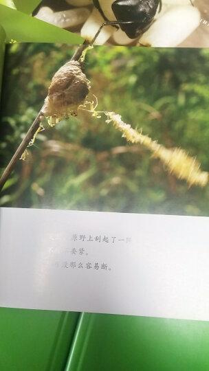 木头马 初中语文阅读与写作辅导班:挑战篇(适用于八年级) 晒单图