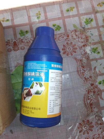 富利特(FRUIT) 猪场1kg 精碘聚维酮碘溶液兽用牛羊兔鸡圈舍消毒剂养殖场消毒药 晒单图