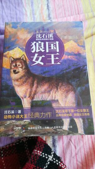 动物小说大王沈石溪感悟生命书系 红豺 晒单图
