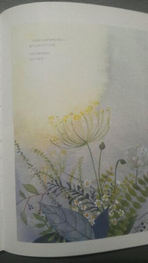 绘·森·活:治愈系的水彩慢生活(水彩插画技法) 晒单图