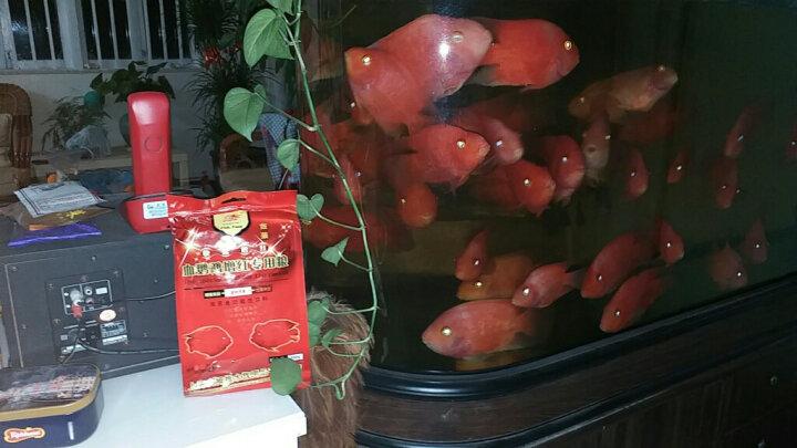 大拇指鱼粮血鹦鹉增红鱼饲料金鱼热带鱼发财鱼罗汉鱼食粮 血鹦鹉饲料500g(袋装) 晒单图