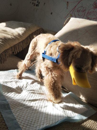 华元宠具(hoopet)狗狗牵引绳泰迪狗项圈胸背带蓝色S 晒单图