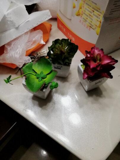 wo+ 仿真多肉植物盆景清新小盆栽家居家装饰品摆设 小号陶瓷斗缸+龙舌兰 晒单图