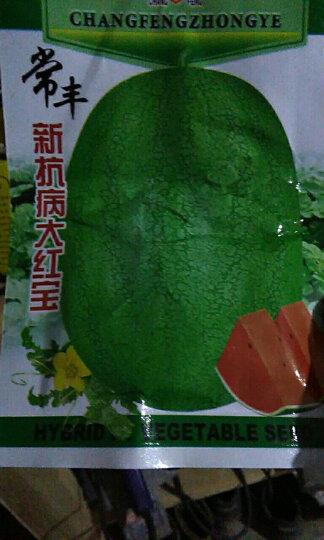四季播种蔬菜种子 黑皮无籽西瓜种子 8424西瓜 黑美人大红宝西瓜种极甜早佳 大红宝 晒单图